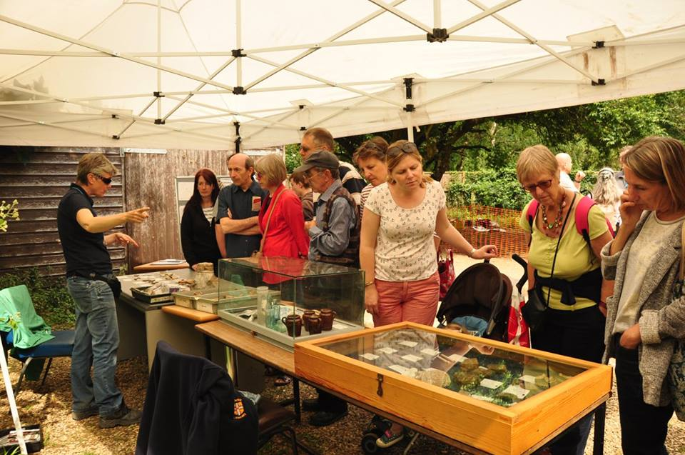 Visitors viewing finds at the Heritage Festival 2016