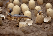 Hadrosaur hatchlings © The Trustees of The Natural History Museum, London