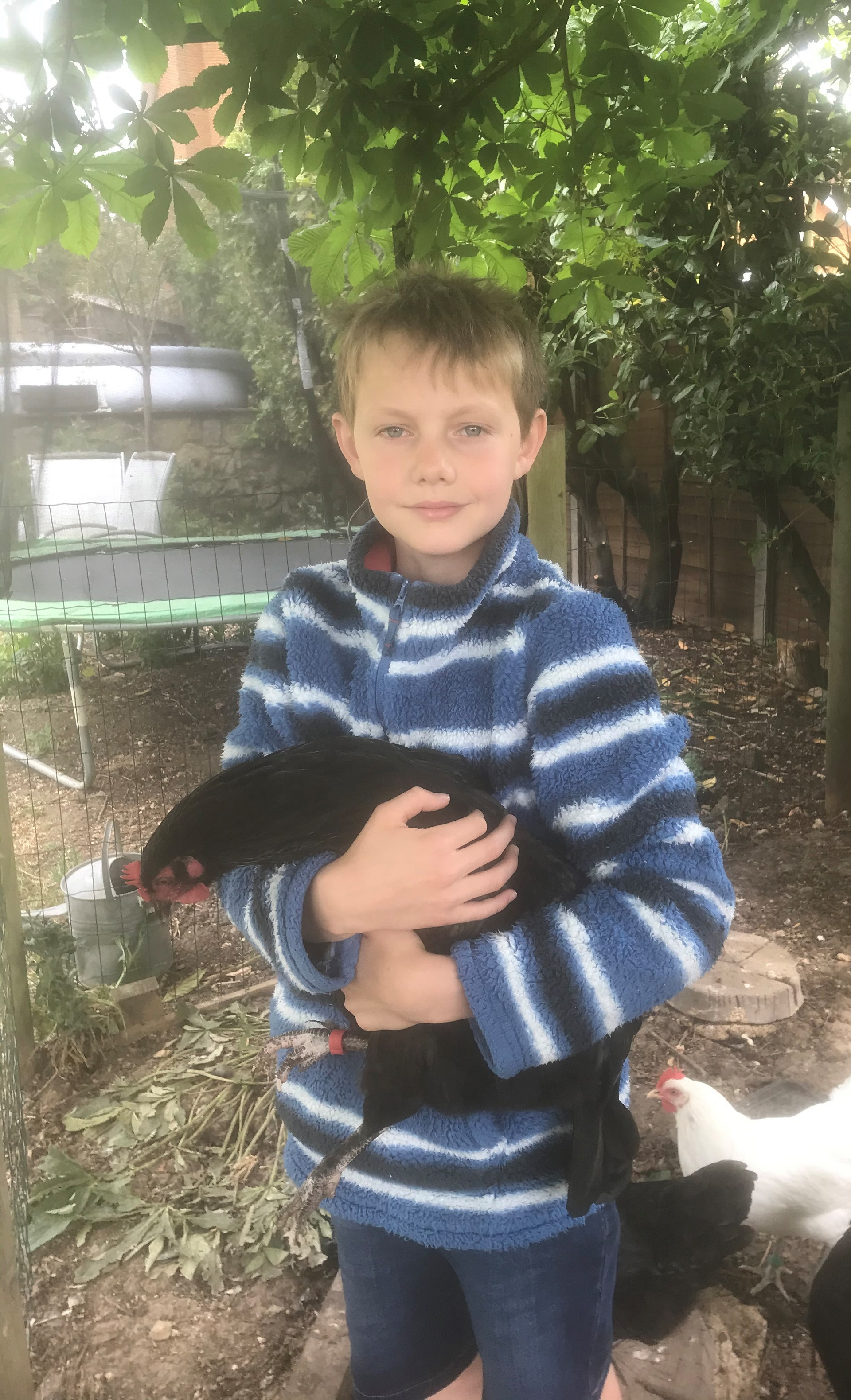 chorister with chickens